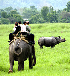 Elephant Wildlife Safari Tour Package