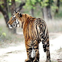 Wildlife Tiger Sanctuary Tours India