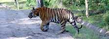 India Parks & Sanctuaries Tours