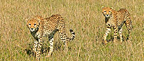 Wildlife Tourism Kenya