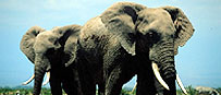 Luxury Wildlife Holiday Tours South Africa