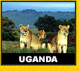 Wildlife Tiger Safari Holiday Tour Uganda