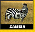 Wildlife Travel Tourism Zambia
