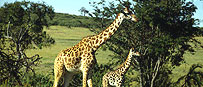 Jungle Safari Tour Packages Zimbabwe